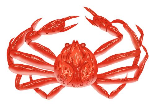 カニ・蟹のイラスト無料素材