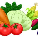 野菜のイラスト無料素材1