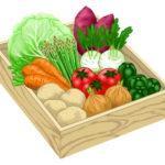 野菜のイラスト無料素材3