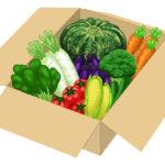 野菜のイラスト無料素材2